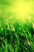 Baharda çimen — Stok fotoğraf