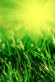 Tráva na jaře — Stock fotografie