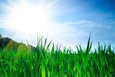 Groene gras en hemel — Stockfoto