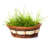 Grass in gasket — Stock Photo
