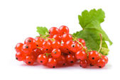 Currants isolated — Stock Photo