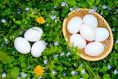 Eggs on grass — Stock Photo