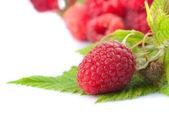 Raspberries — Foto Stock