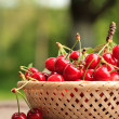 Cherries in basket — Stockfoto