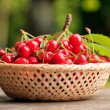 Cherries in basket — Stock Photo #6055112