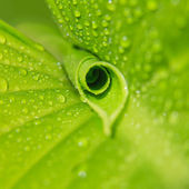 Green leaf with dew — Stock Photo