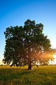 Wedding tree — Stock Photo