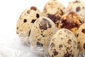 Quail's eggs — 图库照片