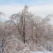 Beautiful winter forest — Stock Photo #6333203