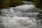 Río verde sobre grandes rocas y cantos rodados con niebla y — Foto de Stock
