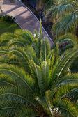 Palm on old Antalyan beach — Stock Photo