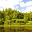Lake and forest. View of the lake near the forest in summer. — Stock Photo