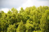 Green park, forest background — Stock Photo