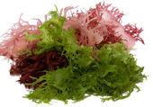Water-plants salad — Stock Photo