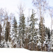 Beautiful winter forest landscape — Stock Photo #6628189
