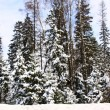 Stock Photo: Beautiful winter forest landscape