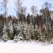 Beautiful winter forest landscape — Stock Photo #6628195