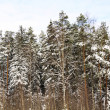 Beautiful winter forest landscape — Stock Photo #6628212