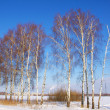 Beautiful winter forest landscape — Stock Photo #6628239