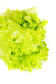Leaf fresh lettuce isolated — Stock Photo