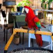 Colourful parrot bird — Stock Photo