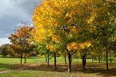 Herbst baum im park — Stockfoto