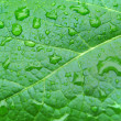 Drops on green leaf — Stock Photo