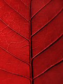 Red leaf texture — Stock Photo