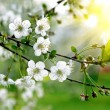 Branch of a blossoming tree — Stock Photo #6181083