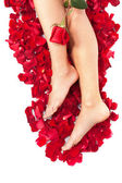 Woman against petals of red roses — Stock Photo
