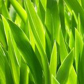 Green plants. — Stock Photo