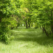 Stock Photo: Green grove.