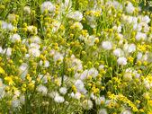 Wild flowers. — Foto de Stock