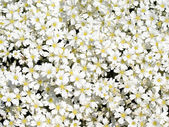 White flowers. — Stock Photo