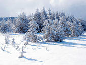 Wintry forest — Stockfoto