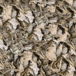 Stock Photo: Dried leaves seamless background