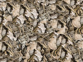 Dried leaves seamless background — Stock Photo