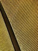Golden feather texture. — Stock Photo