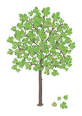 Fig tree — Stock Vector