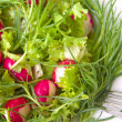 Stock Photo: Salad with radishes