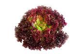 Purple lettuce — Stock Photo
