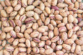 Dried beans — Stock Photo