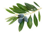 Olives black — Stock Photo