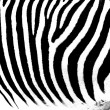 Zebra as pattern — Stock Photo