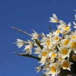 Flower tulip close up against blue sky — Stock Photo