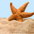 Starfish on beach — Stock Photo #5424518