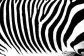 Zebra as pattern — Stock Photo