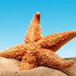 Starfish on sand of beach — Foto Stock
