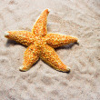 Starfish on sand of beach — Stock Photo