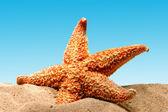 Deniz yıldızı kum beach üzerinde — Stok fotoğraf